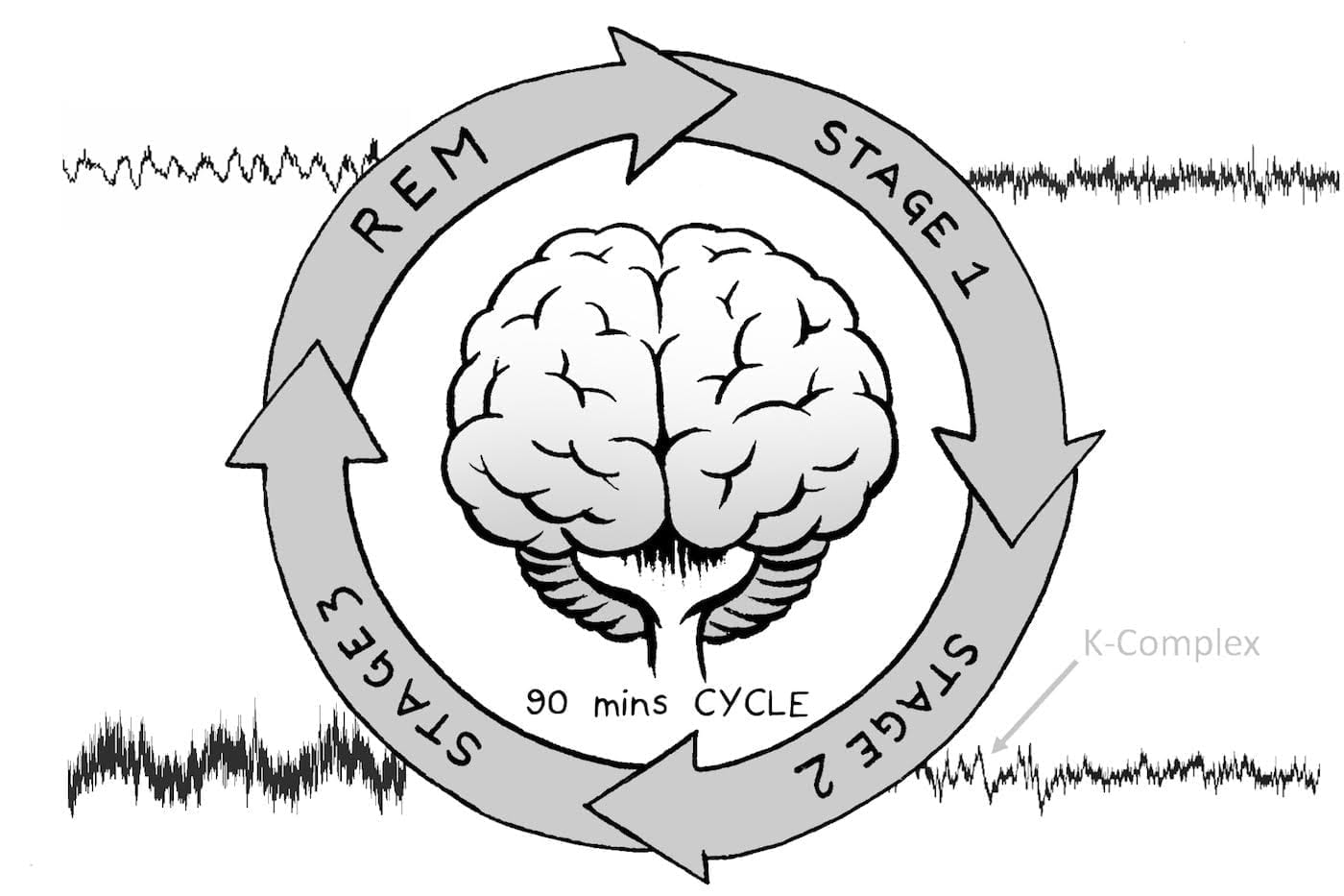 Stages of Sleep and Sleep Cycles by DailySleep.org